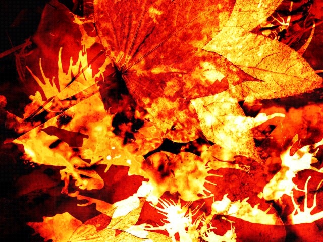 flaming-leaves